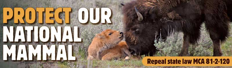 Protect Our National Mammal Billboard