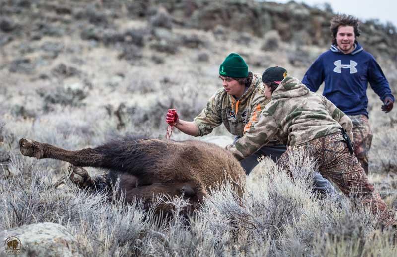 Bison Slaughter 4