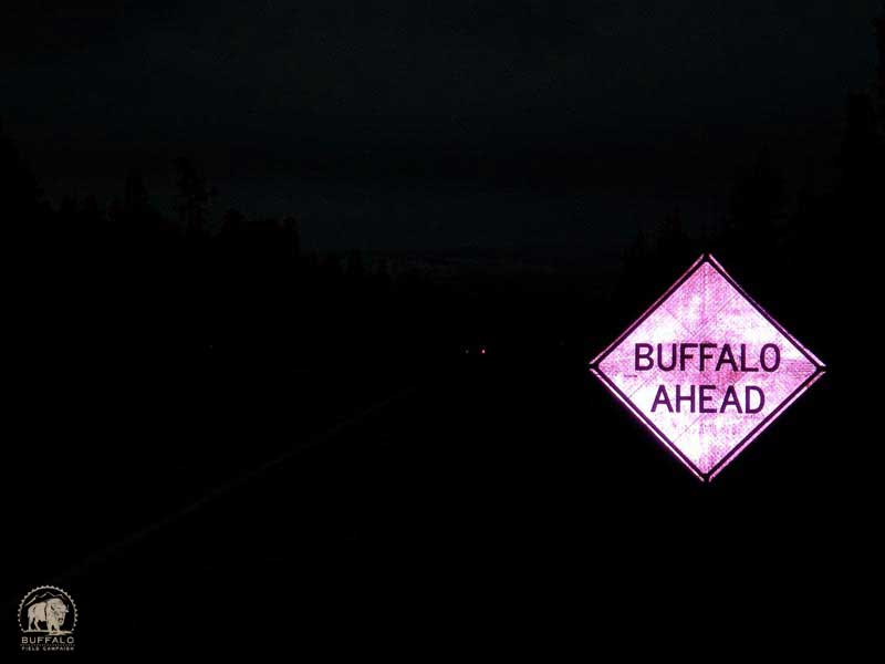 2017 03 30 01 003 Update Buffalo Ahead800