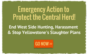 priority action emergency action protect the central herd mobile