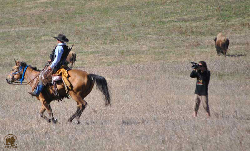 buffalo field campaign volunteer videoing montana department of livestock agent