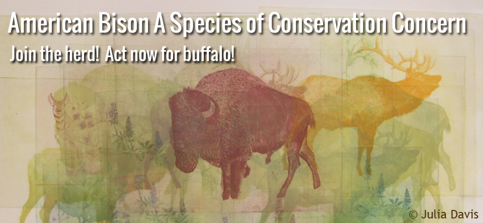 banner american bison species of conservation concern