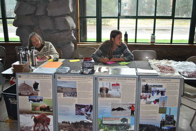 Buffalo Field Campaign Education and Outreach Tabling