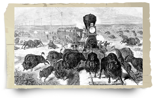 Shooting buffalo from train