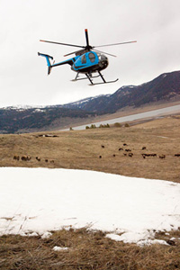 montana department of livestock helicopter haze 05 14 2009