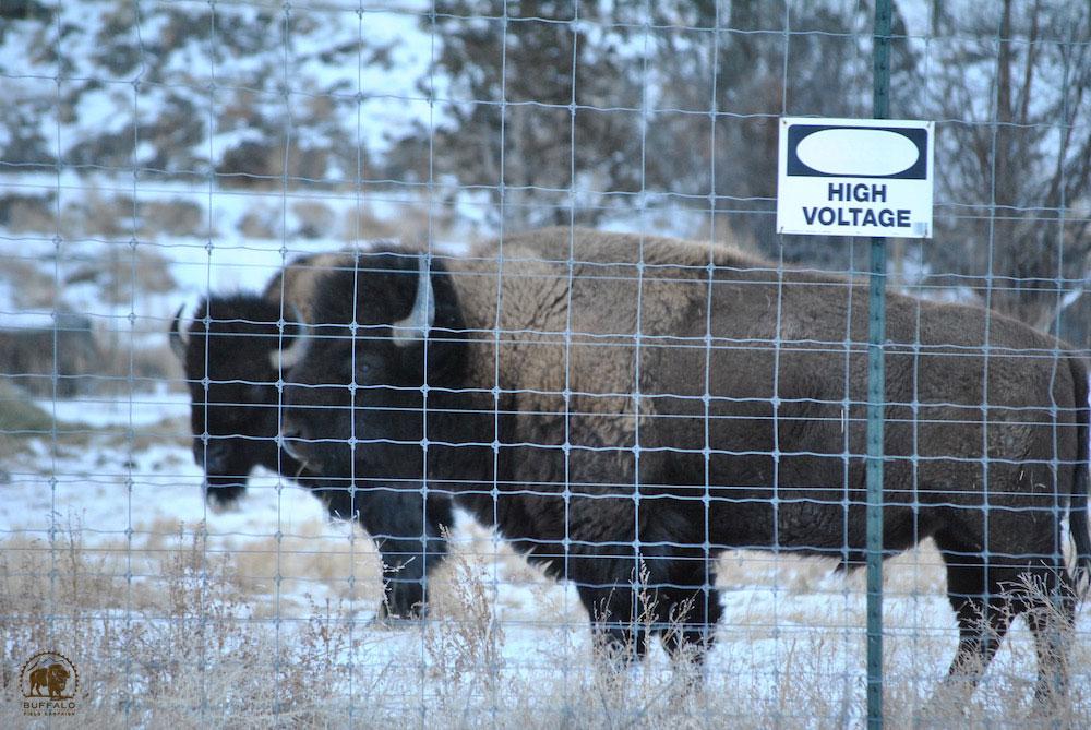 2019 07 09 bison gona con press release