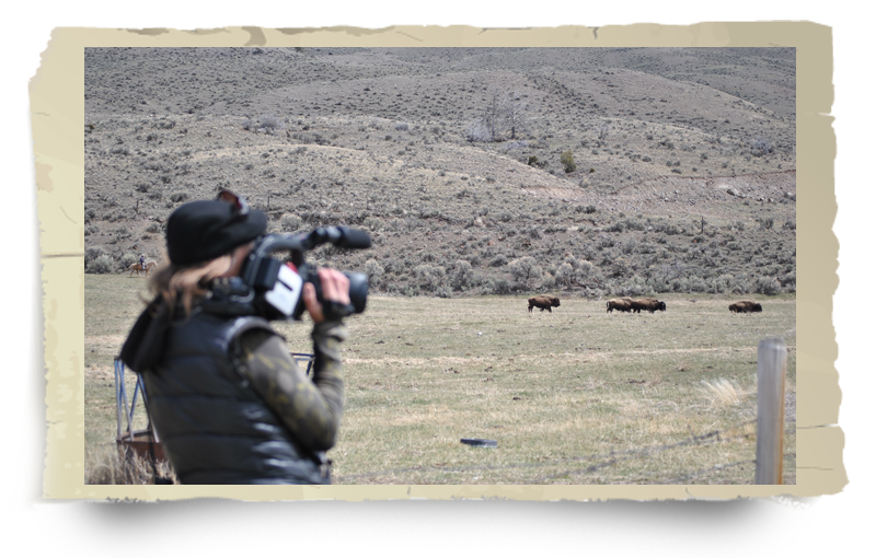 buffalo field campaign volunteer filming in the field no watermark