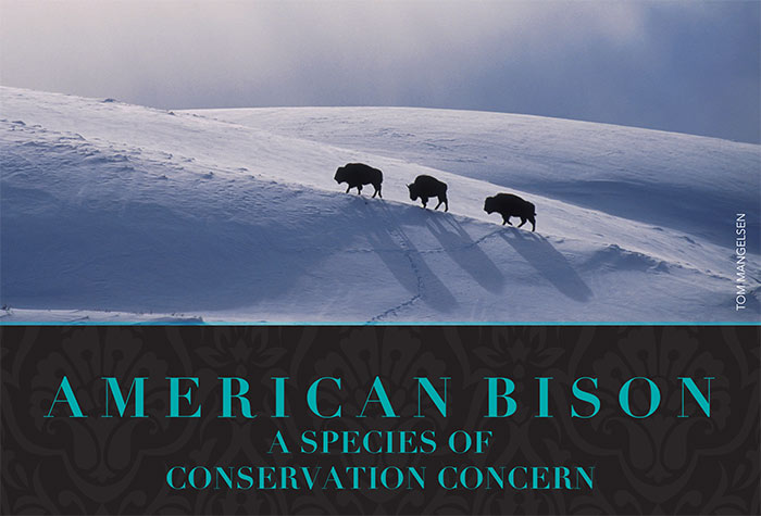 american bison a species of conservation concern